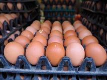 Jajko obrazy stock