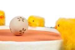 Jajko i kurczątka Zdjęcie Royalty Free