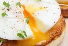 jajko kłusujący obrazy royalty free