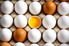 Jajko karton z bielem i brown jajko w środku jajka i otwartego, Obraz Stock