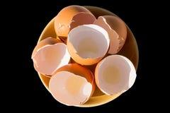 Jajko kurczaka gospodarstwo rolne na tle Obraz Stock