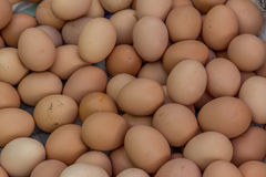 Jajko, kurczaka jajko Zdjęcie Royalty Free