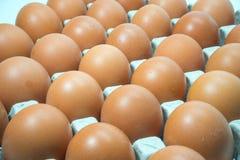 Jajko, kurczaka jajko 3 Obrazy Royalty Free