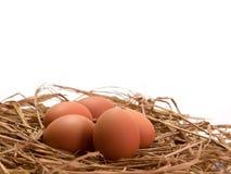 Jajko na białym tle zdjęcia royalty free