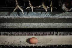 Jajko na konwejeru pasku Fotografia Royalty Free