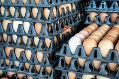 jajko na paczce, surowi kurczaków jajka dla gotować w klingeryt desce przy mąci Obraz Royalty Free