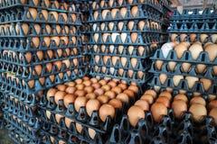 jajko na paczce, surowi kurczaków jajka dla gotować w klingeryt desce przy sto Zdjęcia Stock