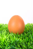 Jajko na trawie Fotografia Stock