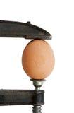 Jajko w kahacie (odizolowywającym) Zdjęcia Stock