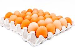 Jajko w kartonie Zdjęcia Royalty Free