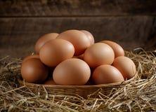 Jajko w koszu na wysuszonej trawie Zdjęcie Royalty Free