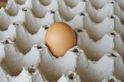 Jajko w papierowej dziurze Zdjęcia Stock