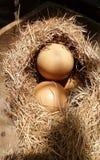 Jajko w siana gniazdeczku pod słońca światłem Obraz Royalty Free
