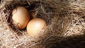 Jajko w siana gniazdeczku pod słońca światłem Zdjęcia Royalty Free