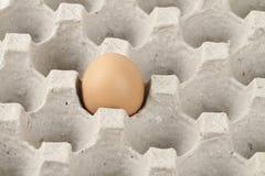 Jajko w taca Obrazy Stock