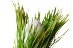 Jajko w trawie Zdjęcia Stock