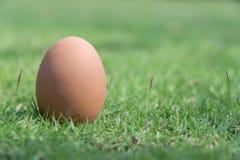 Jajko w zielonej trawie Obraz Royalty Free