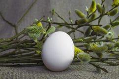 Jajko, wierzba, wierzba, gałąź biała, puszysty, pączek Obrazy Stock