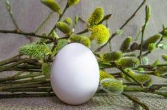 Jajko, wierzba, wierzba, gałąź biała, puszysty, pączek Obraz Royalty Free