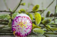 Jajko, wierzba, wierzba, gałąź biała, puszysty, pączek Fotografia Stock