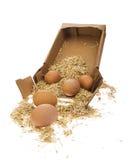 Jajko z słomą Obraz Royalty Free