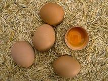 Jajko z słomą Obraz Stock