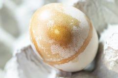 Jajko zaokr?gla? formy obraz royalty free