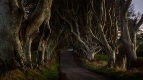 Jak aleja przeplatani bukowi drzewa dzwonił Zmrok Żywopłot, Północny - Ireland obraz stock