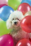 jak balon powietrza jaj ukochany wesoły dzień pogratuluje psa serce przyspiesza bohatera pani s walentynki Obraz Royalty Free
