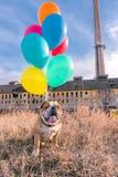 jak balon powietrza jaj ukochany wesoły dzień pogratuluje psa serce przyspiesza bohatera pani s walentynki Fotografia Royalty Free