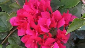 Jak czerwony colour Zdjęcie Royalty Free