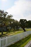 jak działa pokręcony drzewo Fotografia Stock