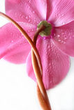 jak działa pokręcony kwiat Obrazy Royalty Free