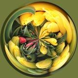 jak działa pokręcony tulipanów Zdjęcia Royalty Free