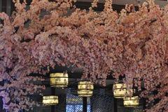Jak Japonia w Fotografia Royalty Free