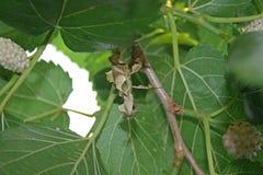 JAK kija insekt Zdjęcie Royalty Free