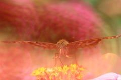 Jak marzenie żółty motyl na kwiacie obraz stock