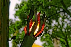 Jak ogrodowy lampion Obraz Royalty Free