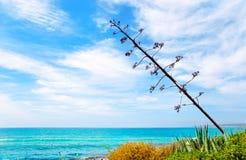 jak śródziemnomorska sceneria agawa kwiat Fotografia Stock