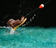 but jak rozczarowanie ryb Zdjęcie Royalty Free