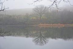 Jak smutny, mgłowy wokoło obrazy royalty free