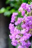 Jakaranda flowers after the rain Royalty Free Stock Photography