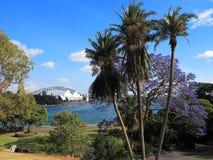Jakarandaträd i Sydney Botanic Garden Arkivbilder