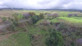 Jakarandaträd som blommar på kullen av det enorma fältet i Kula, betar på landskap för panorama för surr för den Maui öHawaii ant stock video