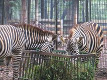 Ragunan zoo, Jakarta stock photography