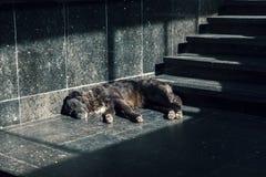 Jake de hond royalty-vrije stock foto