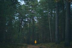 Jaki Październik patrzeje jak Latvian las w Fotografia Stock