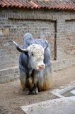 Jakken in de Dierentuin van Belgrado Royalty-vrije Stock Foto's