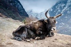 Jakken die in bergen liggen Royalty-vrije Stock Afbeelding