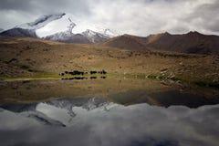 Jakken die in Verbazend Indisch Himalayagebergte worden gevestigd stock foto